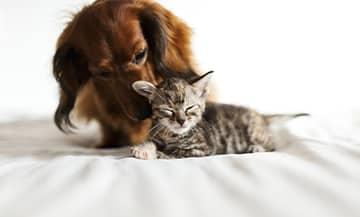 Lilys Kitchen, ce sont Recettes équilibrées à base de produits frais et de grande qualité adaptées pour tous les chats et chiens