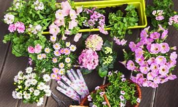 Jardinage Balcon