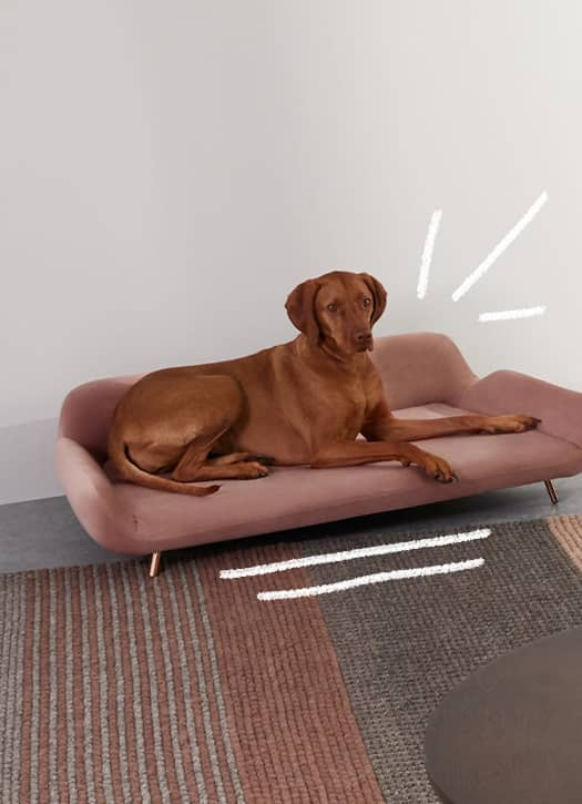 Panier Moby pour chien, Made