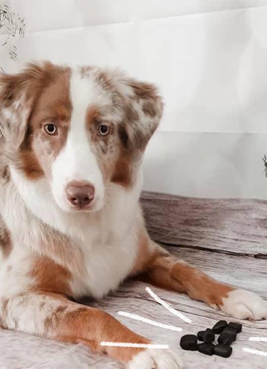 Compléments alimentaires Sérénité et Vitalité pour chien, Flouf