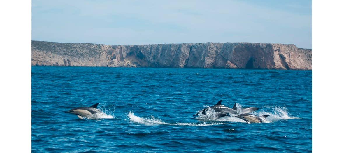 La station d'observation océanographique de Mar Ilimitado,