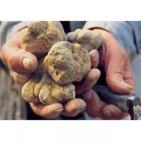 Pêche aux truffes