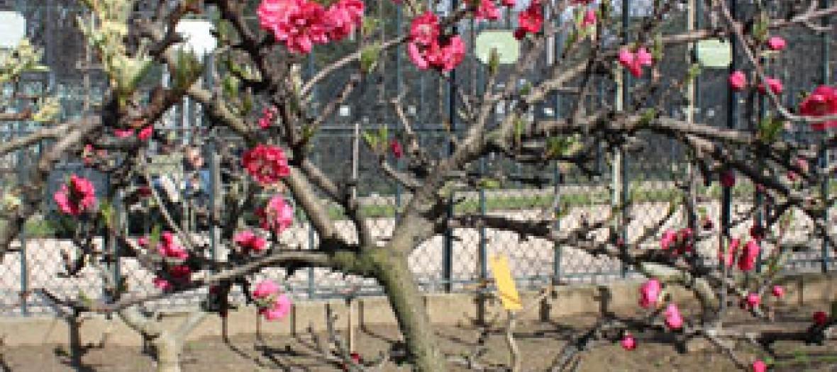 Autour du jardin du luxembourg for Autour du jardin
